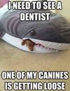 Canine's Loose